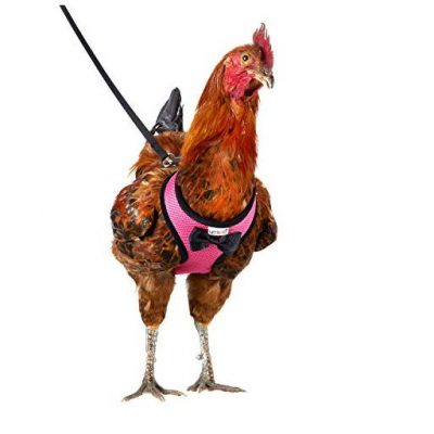 Chicken Harness And Leash - Fun Gifts For Him