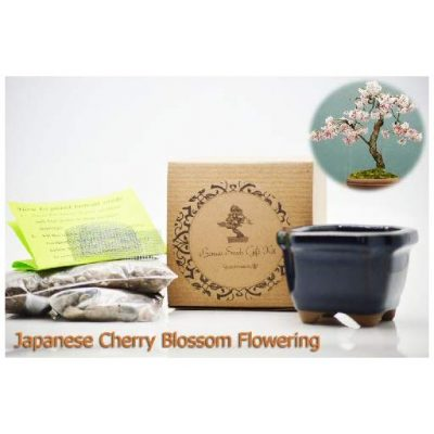 Cherry Blossom Bonsai Seeds - Fun Gifts For Him